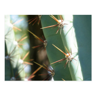 Several Thorns On A Cactus Postcard