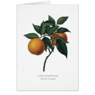 Seville Orange Card