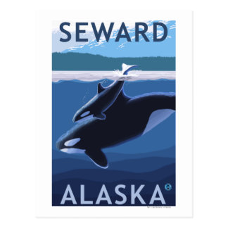 Seward, AlaskaOrca and Calf Scene Postcard