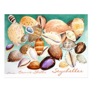 Seychelles Cowrie Shells Postcard