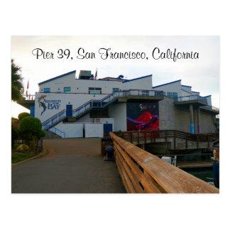 SF Aquarium of the Bay #2 Postcard