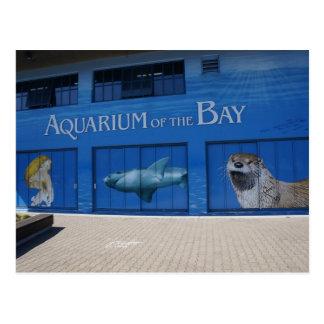 SF Aquarium of the Bay Postcard