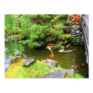 SF Japanese Tea Garden Koi Pond #3 Postcard