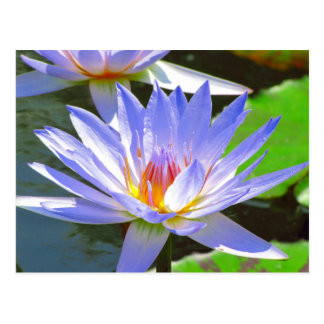 SG Blue water Lily #12N  012 Postcard