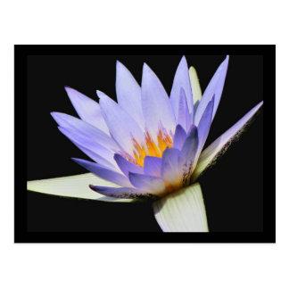 SG Blue water lily Postcard #300N  0300