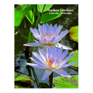 SG Pair of BLUE water lilies #100  00100 Postcard
