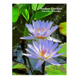 SG Pair of BLUE water lilies #100  00100 Postcard