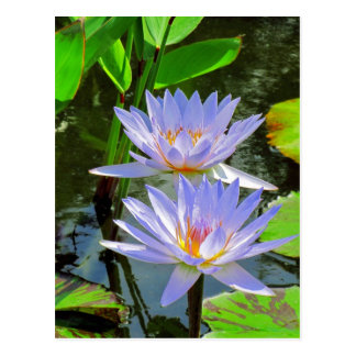 SG Pair of BLUE water lilies #70 Postcard