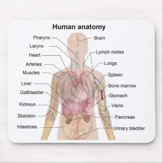 Shadow Diagram of the Human Anatomy Mouse Pad