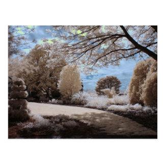 Shadow Of The Garden Postcard
