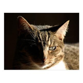 Shadowed kitty postcard