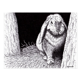 shadowy rabbit animal drawing postcard