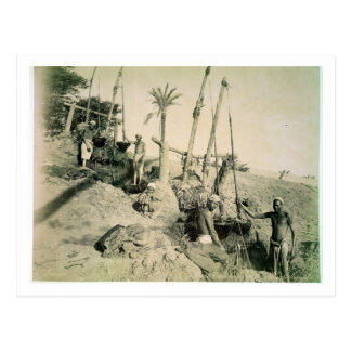 Shadufs in Upper Egypt (sepia photo) Postcard
