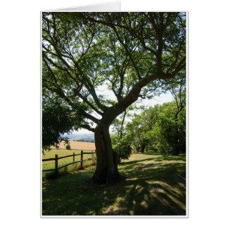 Shady Tree Card