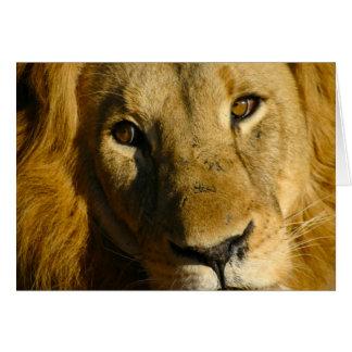 Shaka Eye of the Lion Card