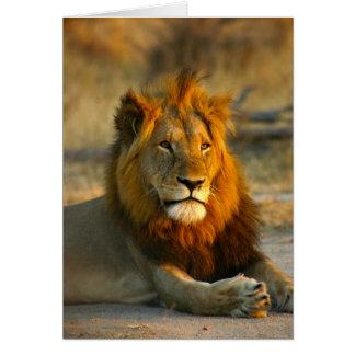 Shaka the Lion at Sunset Card