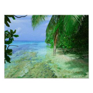 Shallow Tropical Sea Poster