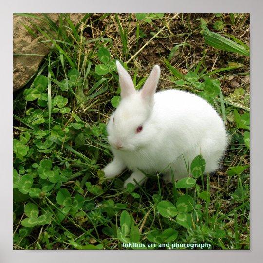Shamrock Rabbit Poster
