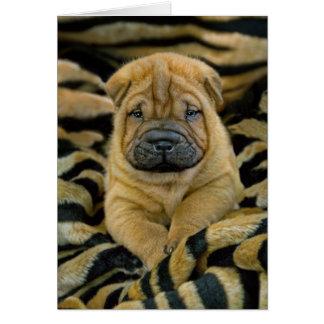 Shar-Pei 4 week old Pup Card