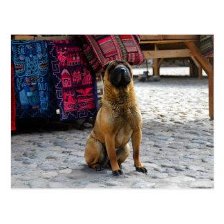 Shar Pei Dog, Ollantaytambo, Peru Postcard
