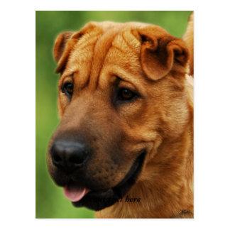 Shar Pei Dog Postcard