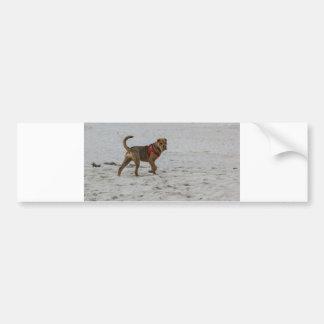 shar pei on beach bumper sticker