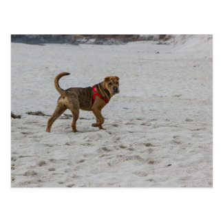 shar pei on beach.png postcard