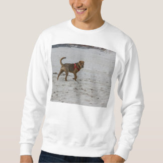 shar pei on beach sweatshirt