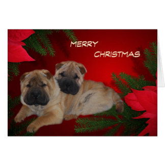 Shar Pei Puppies Poinsettia card