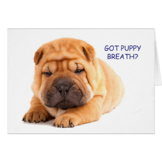 Shar Pei Puppy Birthday Card