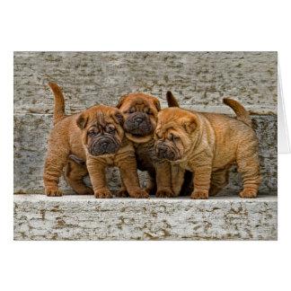 Shar-Pei Pups 3 in a row Card