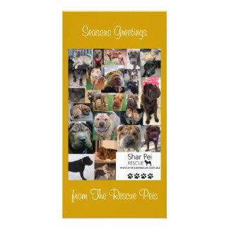 Shar Pei Rescue Xmas Card Photo Greeting Card