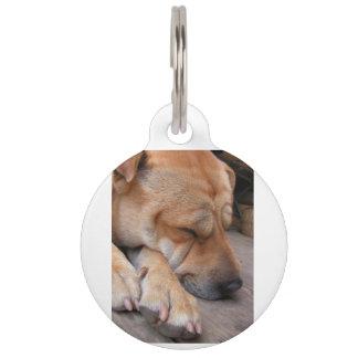 shar pei sleeping pet ID tag