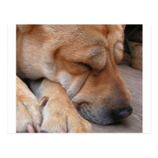 shar pei sleeping.png postcard