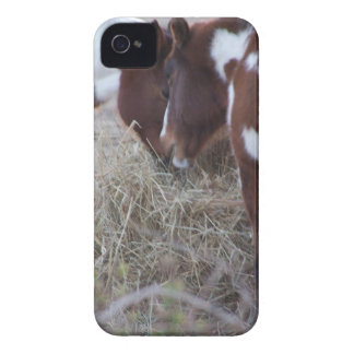 Sharing Case-Mate iPhone 4 Cases