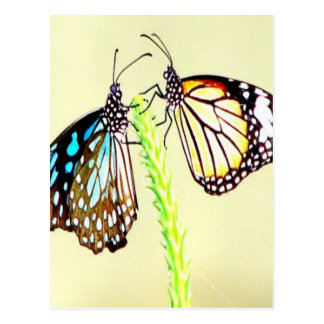 Sharing love peace and joy Blue Tiger Butterfly Postcard