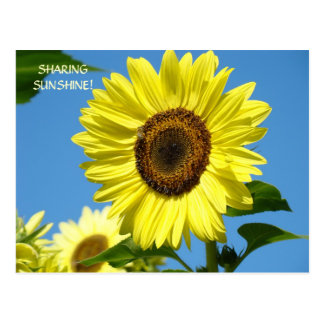 SHARING SUNSHINE Sunflower Post Cards Sun Flowers