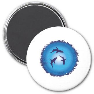 shark 3 inch round magnet
