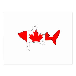 Shark Canada Postcard