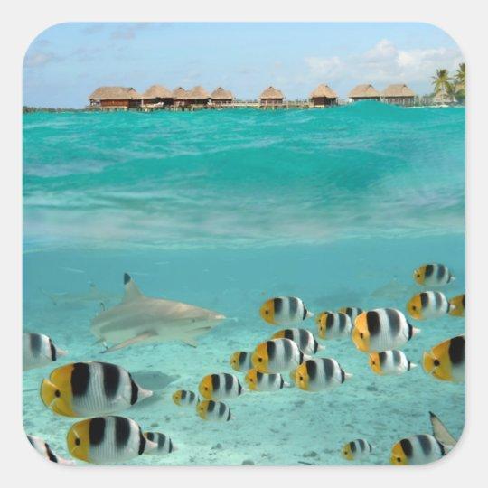 Shark chasing fishes in Bora Bora lagoon sticker