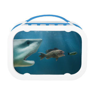 Shark chasing sea bass chasing juvenile lunch boxes
