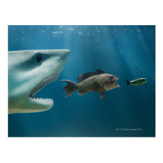 Shark chasing sea bass chasing juvenile postcard