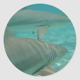 shark classic round sticker