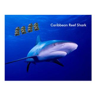 Shark image for postcard