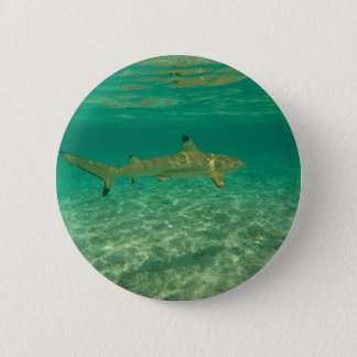 Shark in will bora will bora 2 inch round button