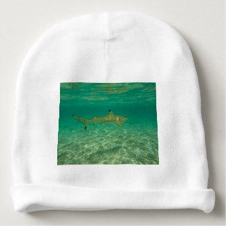 Shark in will bora will bora baby beanie