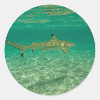 Shark in will bora will bora classic round sticker