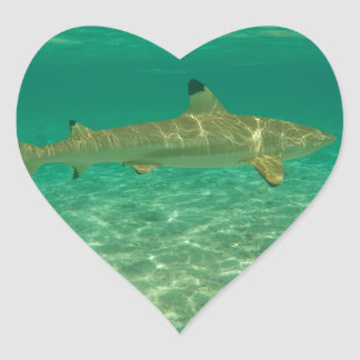 Shark in will bora will bora heart sticker