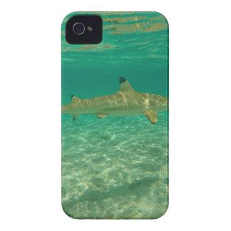 Shark in will bora will bora iPhone 4 cases