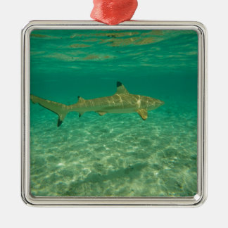 Shark in will bora will bora metal ornament